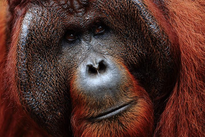 Neuf animaux à voir en Indonésie