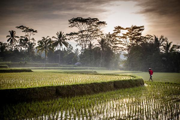 Bali, l'Île des Dieux et perle d'Indonésie