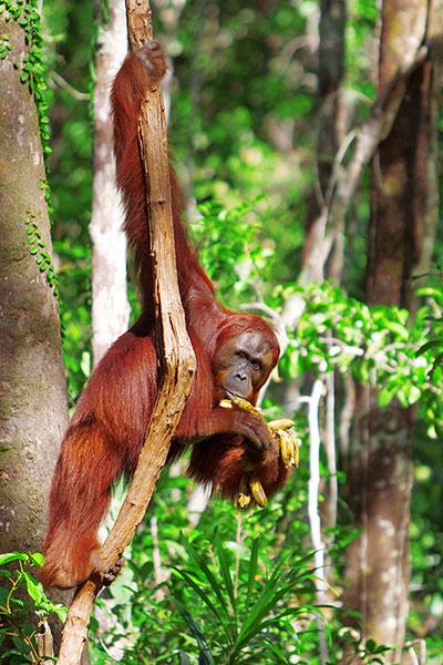 tanjung-puting-national-park