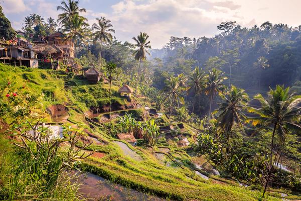 Paysages dans les environs d'Ubud, photo © Christophe Faugere via Shutterstock