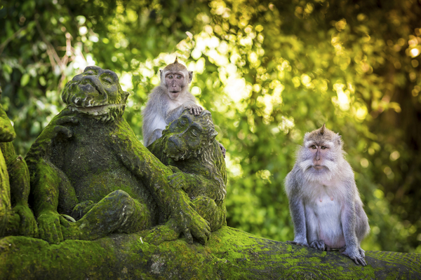 Forêt des singes d'Ubud, photo via Shutterstock